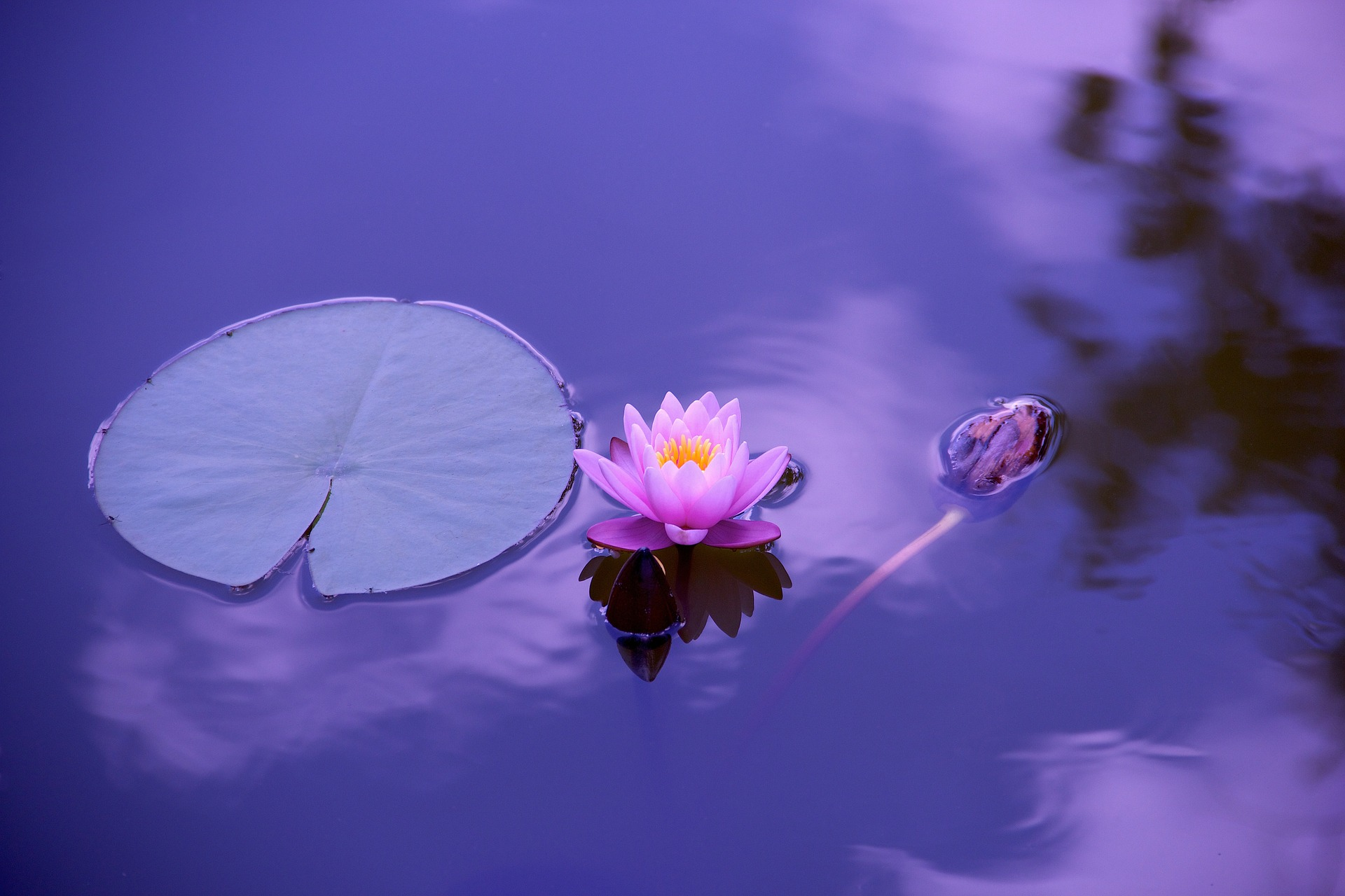Buddhista történetek
